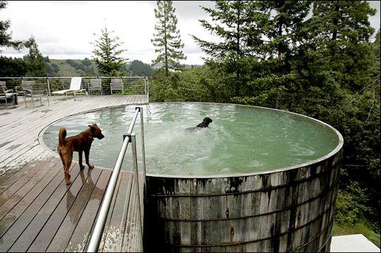 livestock tank pool  (8' tank about $300, salt water filter, $150)