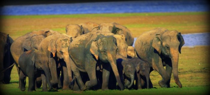 Srí Lanka Last minute za 7777 Kč. #SriLanka