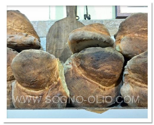 Pane di Altamura, the Italian bread of Puglia