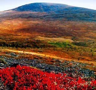 Ruska = autumn colors in Lapland, Finland