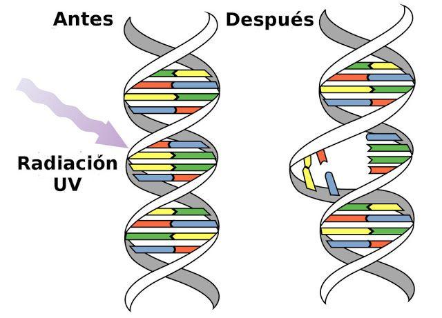 """#Salud Aseguran que los rayos UV dañan el ADN   Cáncer de Piel - Riesgos y cuidados cuando llega el sol  Turek: """"Los rayos UV dañan el ADN""""  Dijo el Dr Alejandro Turek (M.N. 65.164) sobre el cancer de piel: """"A mayor exposición al sol mayor riesgo. Los rayos UV dañan el ADN nuestra información genética. Los UVA generan envejecimiento de la piel; nos arrugan o manchan en el correr del tiempo. La exposición repetida a la radiación ultravioleta del sol es considerada por la ciencia el mayor…"""