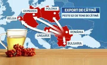 Export de catina