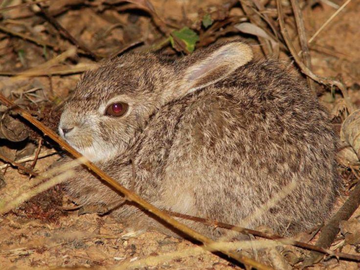 Karlapat Wildlife Sanctuary - in Odisha, India