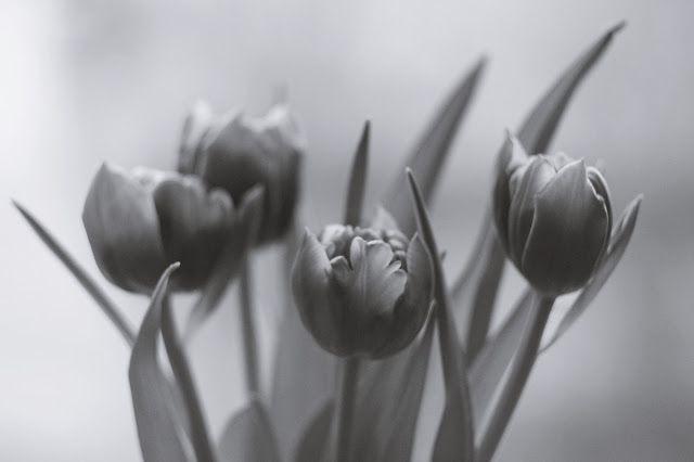 ...  świat wokół mnie   ...: ... tulipany ...