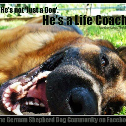 He's not just a dog, he's a life coach GSD