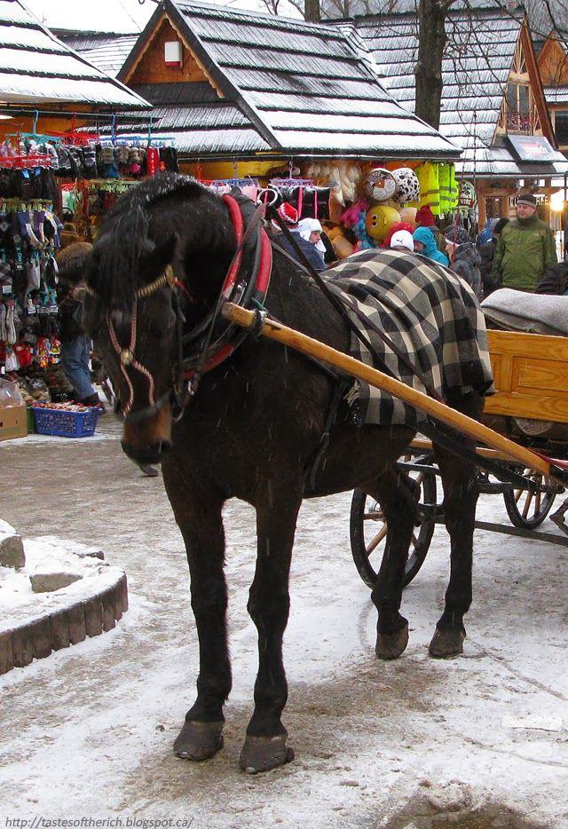 Poland, Zakopane, horse