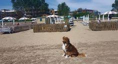 Der neue und moderne Doggy Beach in Lignano Sabbiadoro verfügt über 90 Plätze mit Sonnenschirm und zwei Liegebetten mit Dach und - auf Wunsch - auch mitLiege für den Hund. Darüber hinaus werden 10 Dog-Vip Plätze geboten (4,00 m x 3,20 m), indem Hunde auch ohne Leine laufen können. Die wei…
