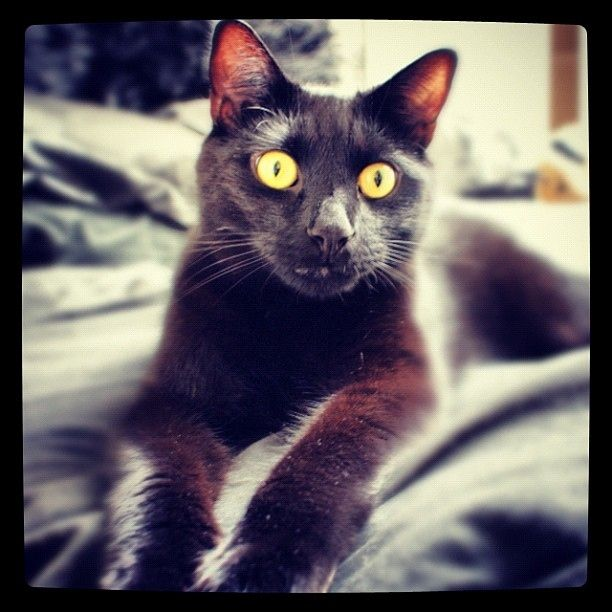 National. BLACK  Cat Day August,17,2013
