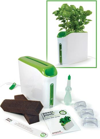 Growing Herbs Indoors In Provera's Mini Power Plant