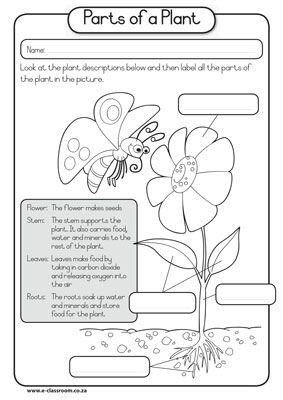 lable a flower worksheet flowers are flowering longitudinal