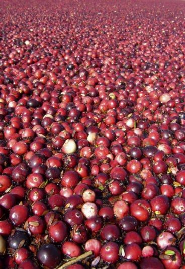 Benefícios do suco de cranberry - Imunidade reforçada