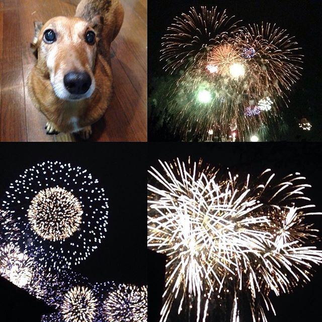 花火大会に行って来ました🎆 There was a fireworks display today. I went to a fireworks display exhibition. My dog looks tired. 花火の打ち上げ会場近く迄クッペちゃんを抱っこ、重い💦疲れました!  #fireworks #japan #holiday #dog #saturday #fireworksdisplay #花火 #instagood #instadog #lovedog #ワンコ #花火大会 #愛犬 #おでかけ