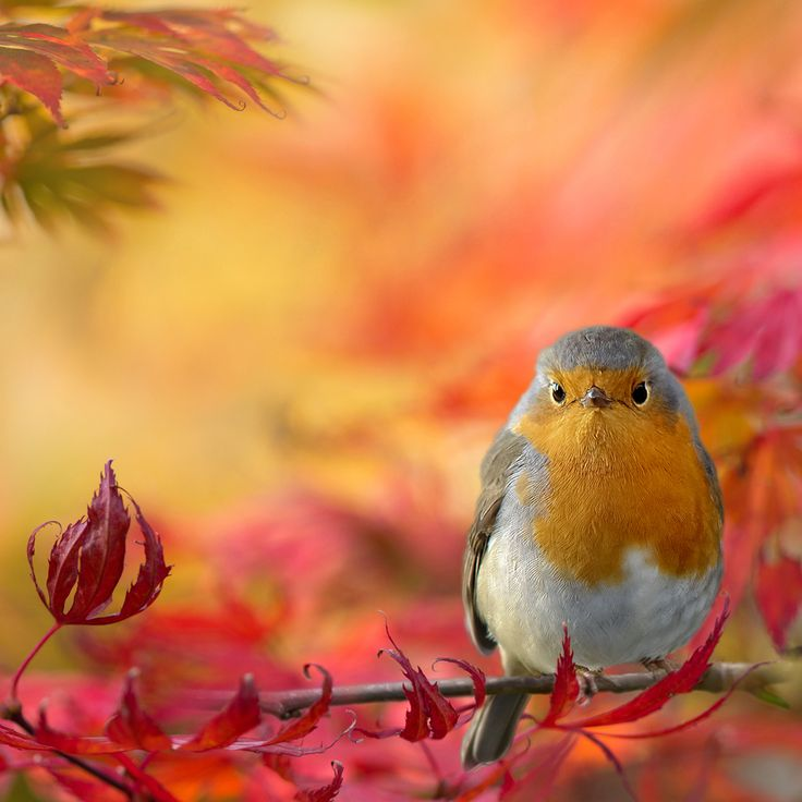 Singular little bird in such a colorful setting! Fifty Shades of Color