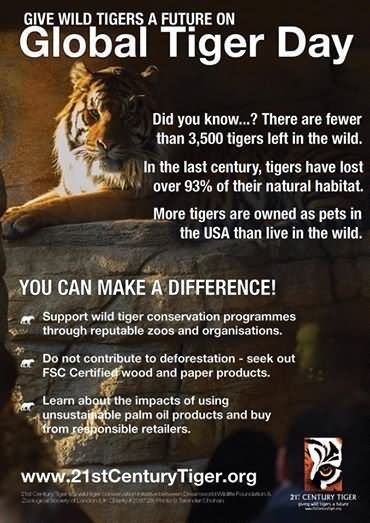 Although it's not global tiger day, I wanted to post some probable #facts. As animal lovers, we can make a difference. Find an organization that's right for you. One that donates most of its monies directly TO #ANIMAL #CONSERVATION #ENDANGERED #SPECIES. #NWF & #WWF have #adopt a species. It really is matter of #LIFE or #DEATH for more species each year. Just small amounts or volunteer to speak on behalf of #wildlife, makes a difference! #ThankYou