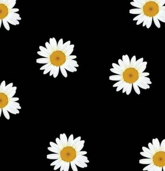daisies_Wallpaper