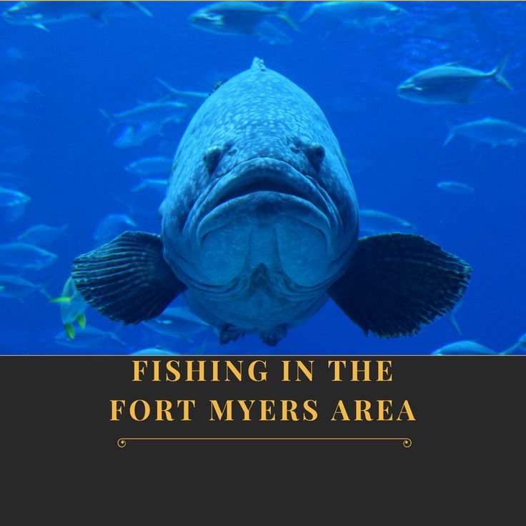 210 best images about ft myers sanibel fl activities on for Fishing charter fort myers beach fl