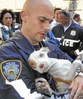 NYPD Rescues 47 Pit Bulls from Dogfighting Ring - Thank you NYPD!