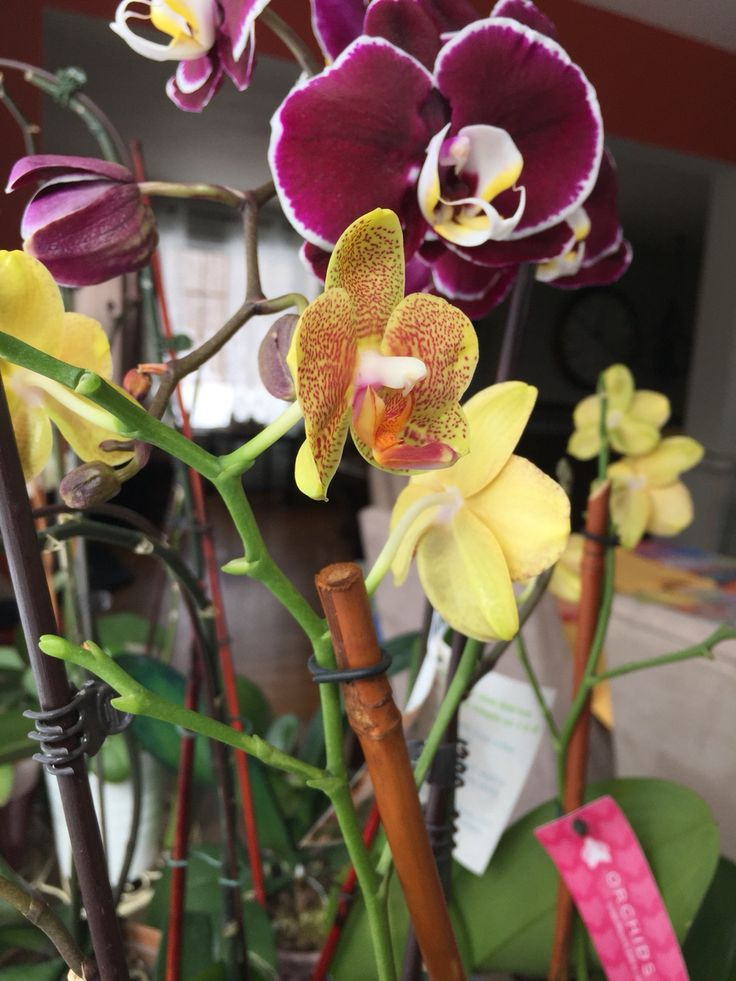 Orchids ...love my orchids... Started with one .. Now I am the owner of 20+ orchids