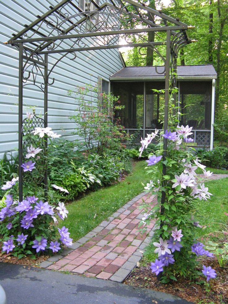 Clematis on a metal arbor as a transition into the garden...