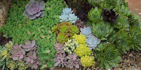 1000 Id Es Sur Le Th Me Jardin De Plantes Grasses Sur Pinterest Plantes Grasses Arrangements