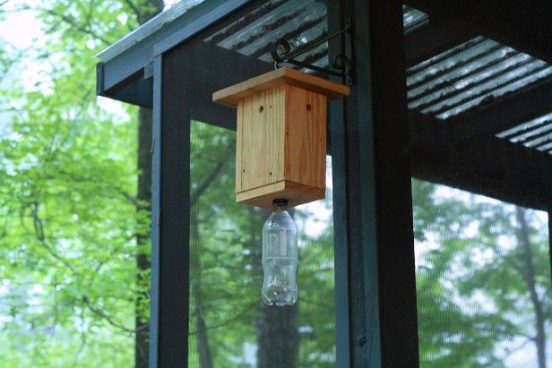 A Simple DIY Carpenter Bee Trap: http://www.hgtvgardens.com/pests/the-buzz-on-carpenter-bees?soc=pinterest