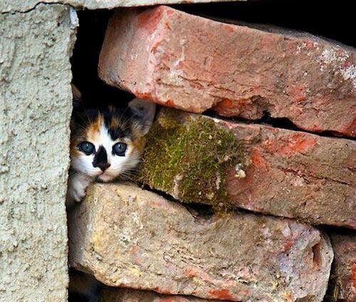Kitten peeking out between the rocks!