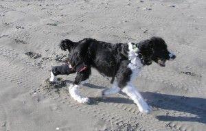 A-Trac Dynamic Brace Dog Anterior Cruciate Ligament Tear (ACL) Ducky