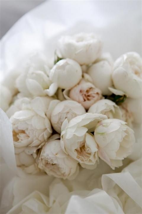 pure white peonies, a wonderful wedding bouquet