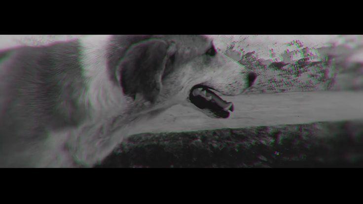 Vida de Perro - Nanpa Básico (Vídeo Oficial )