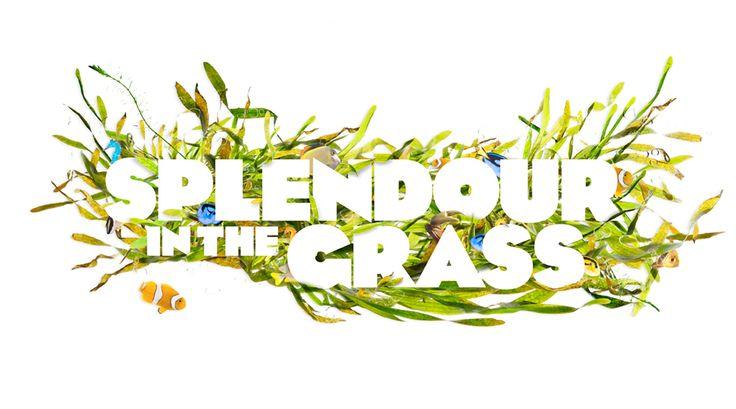 Love the Splendour in the Grass artwork:)  www.byronbaycampinghire.com.au