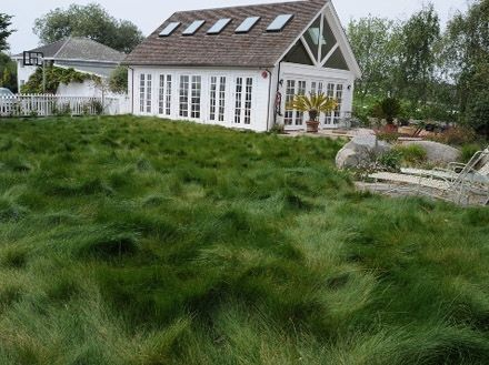California Native Mow Free can be maintained as a turf lawn or left unmowed.  It contains two native fine fescues and one highly naturalized...
