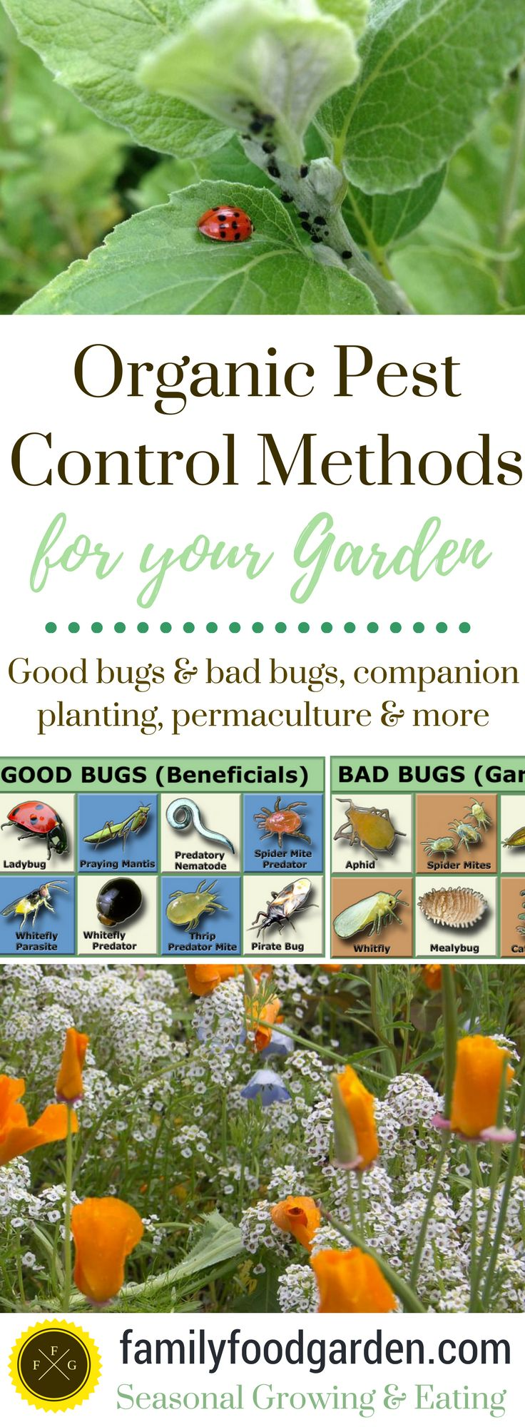 340 Best Garden And Flowers Images On Pinterest Gardening Herb Gardening And Herb Garden