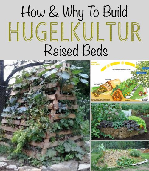 How And Why To Build Hugelkultur Raised Beds Homestead