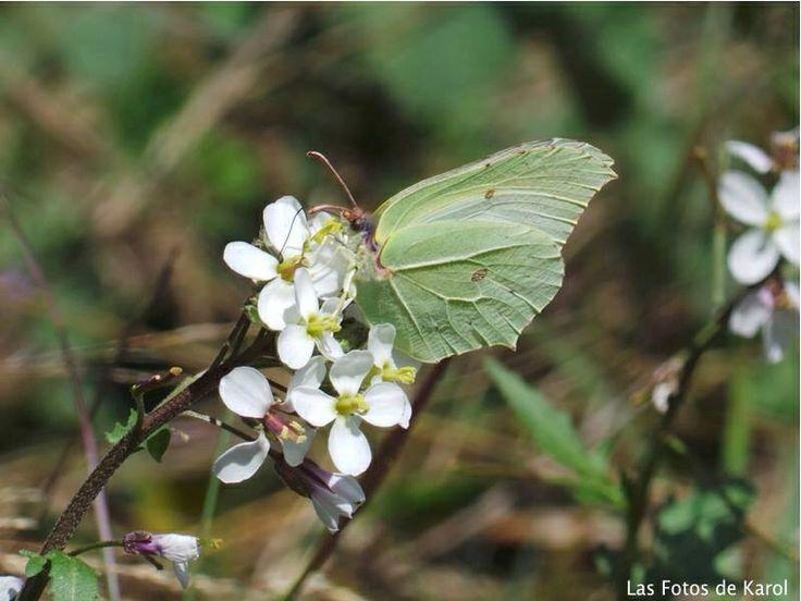 #Naturaleza  #flores #mariposa