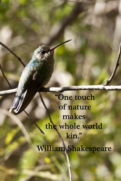 the meaning of the bird imagery in william shakespeares macbeth Free essay reviews  shakespeare uses imagery and figurative language to show that a forbidden love can  but there is no need to guess about the meaning of.