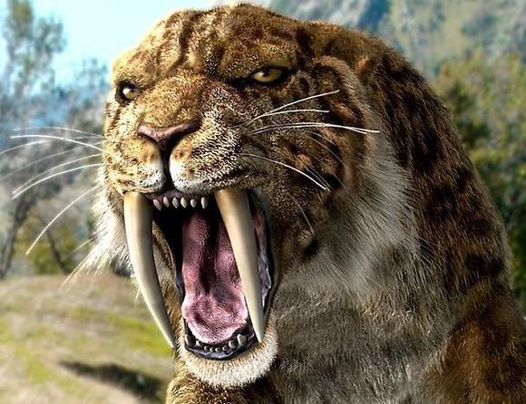 Smilodon Basics + The American lion - Album on Imgur
