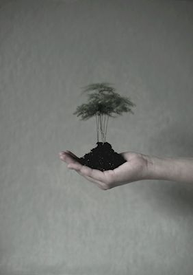 days by leon - The island. A photograph of a person holding a small pile of earth and a small tree in their hand.