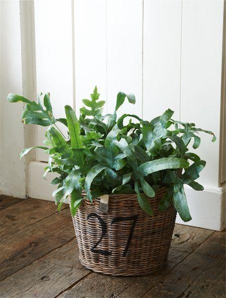 Rustic Rattan Planter Medium