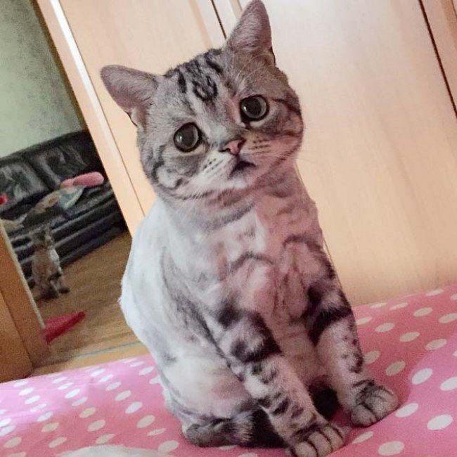 Descubre al adorable Luhu, el #gato más triste del mundo. #pets #mascotas #gastos #love