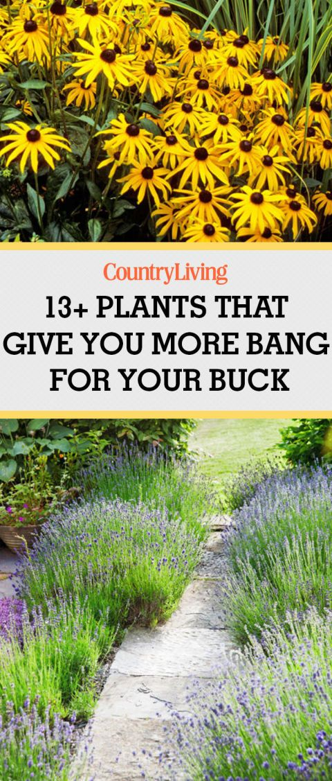 13 plants that give you more bang for your buck