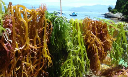 Available results from various sources on why carrageenan is safe