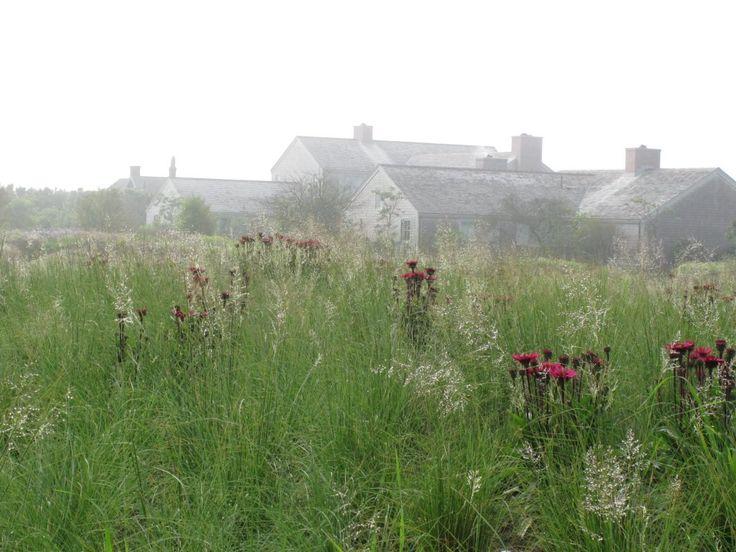 17 best native missouri plants images on pinterest for Piet oudolf favorite plants