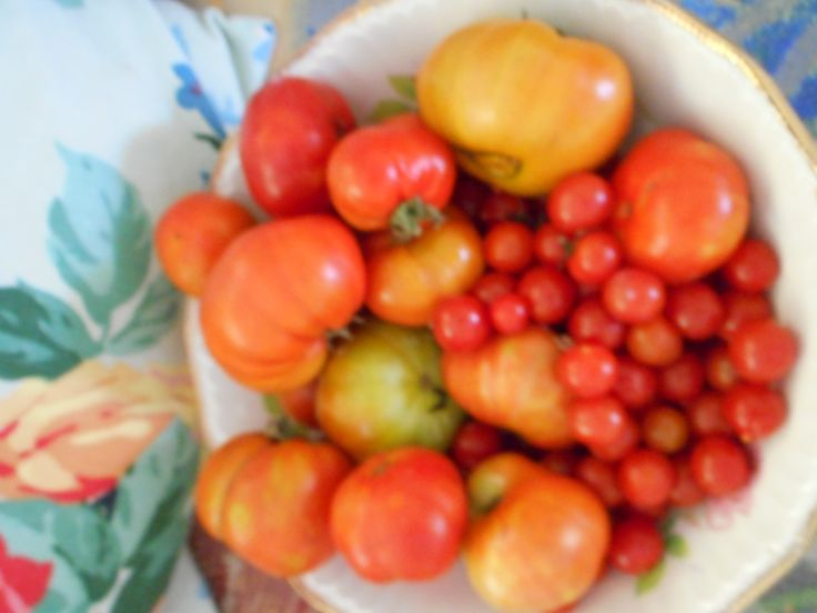 tomatoes picked at dawn on a hot day