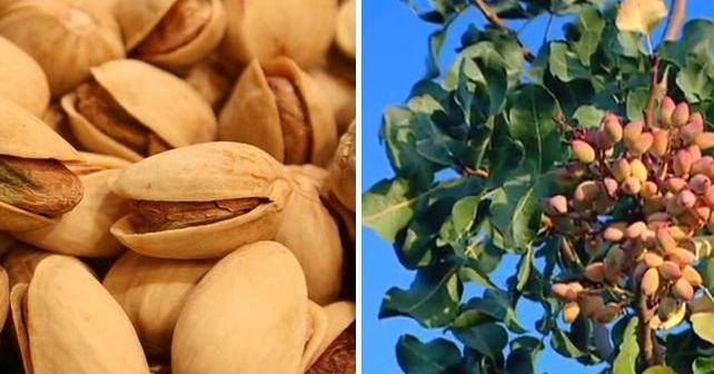 ¿Quieres cultivar uno de los frutos secos más beneficiosos y bajos en calorías?