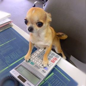 Welcome to Chihuahua and Associates Acounting how can I help you? #Chihuahua