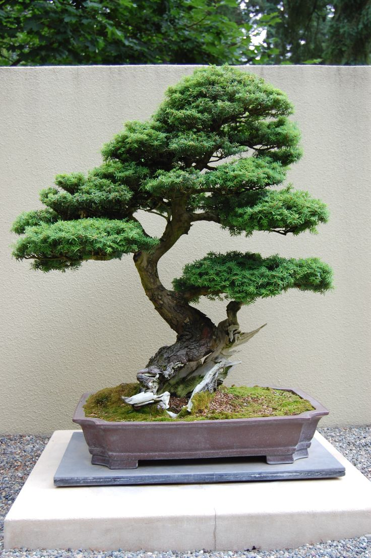 1000 Images About Bonsai Zen On Pinterest