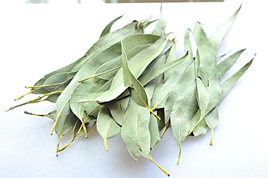"""""""Eucalyptus Tea""""  Eucalyptus does have incredible medicinal properties… it combats:  snoring  fevers  infections  colds  sore throats  weeping in the grocery aisles"""