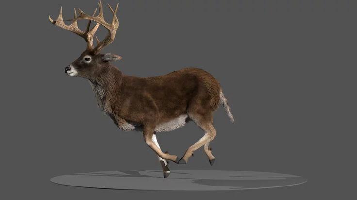 Deer on Vimeo