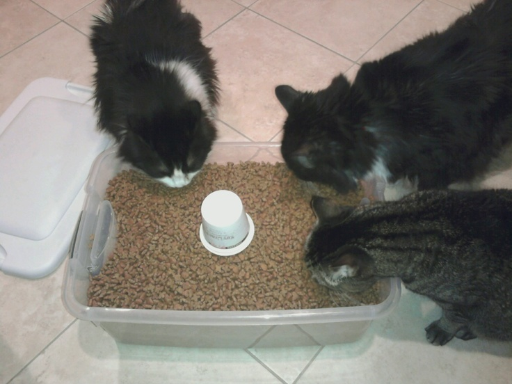 I can't even fill the cat food container without being bombarded!!Cat Food, Food Container