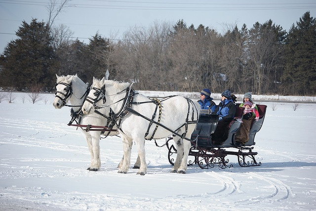 52 Best Horse Drawn Vehicles A Sustainable Partnership